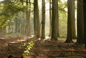 AGV 2007 Het Bosgoed - bos